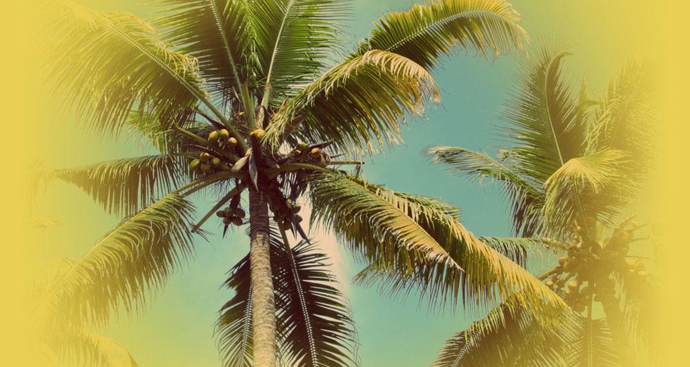 Olio di cocco principi attivi for Pianta di cocco