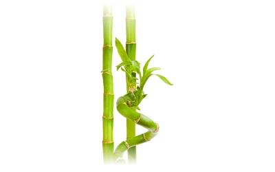 bambu19