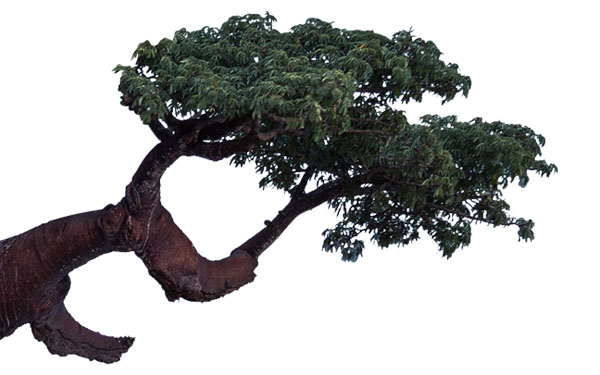 anteprima-estratto-di-baobab