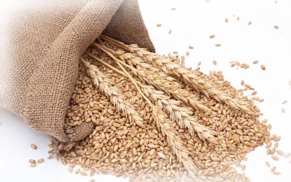 anteprima-proteine-del-grano